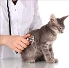 Ветеринарные клиники в Боговарово